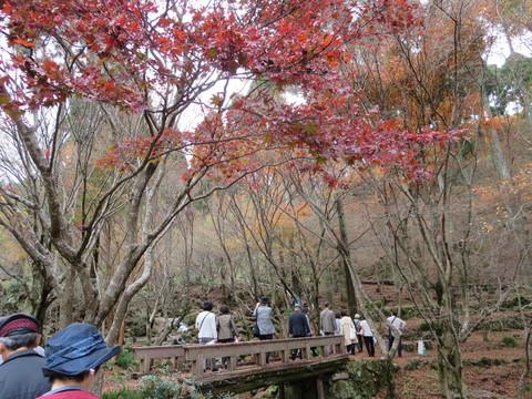ハイブリッドコンサルタントうっちゃん:厳木町「環境と芸術の森」のモミジ