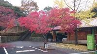 園内紅葉情報 11月14日現在。