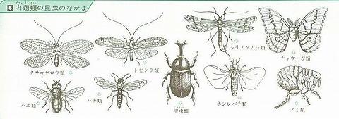 昆虫の分類 - JapaneseClass.jp