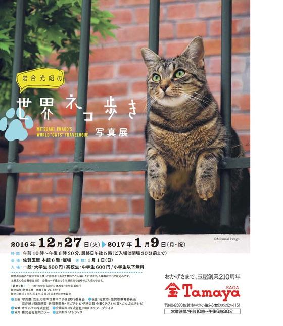 岩合 光昭の 世界のネコ歩き 写真展 開催決定!!